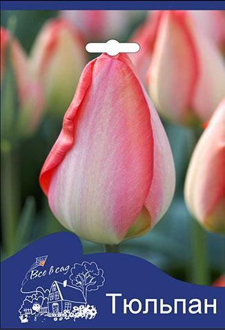 70bf4e053 Tulip-Big-Chief.jpg
