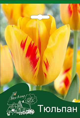 32be14cfa Tulip-Olympic-Flame.jpg