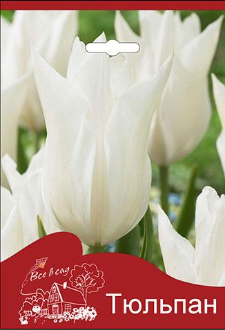 1e51acacb Tulip-White-Triumphator.jpg